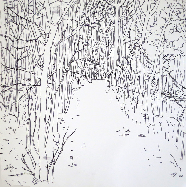 Woods Drawings 2015-2016