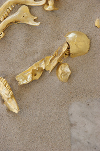 Nancy Wyllie Video Sculpture & Installation 22 K gold leaf on fawn bones denuded over a five year period