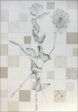 PAT CRESSON + Drawing > Botanical Drawings graphite and collage on rag paper