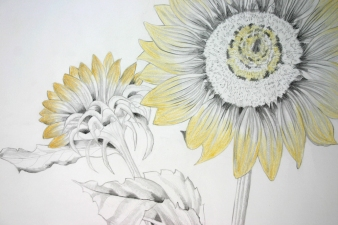 PAT CRESSON + Drawing > Botanical Drawings