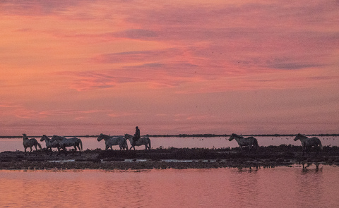 Peggy Braun Horses on the Land Photography