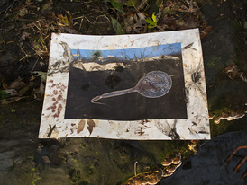 Peter L. Johnson Deep Waters The water often shows me how to weave marks into and expand the intention of the original photograph. Here leaves were emblazoned soaking overnight. Berries splattered from above. Stems became brushes. My dross landscape cross-section sperm was invaded…it needed it.