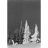 Winter in Yellowstone Silver Gelatin Print