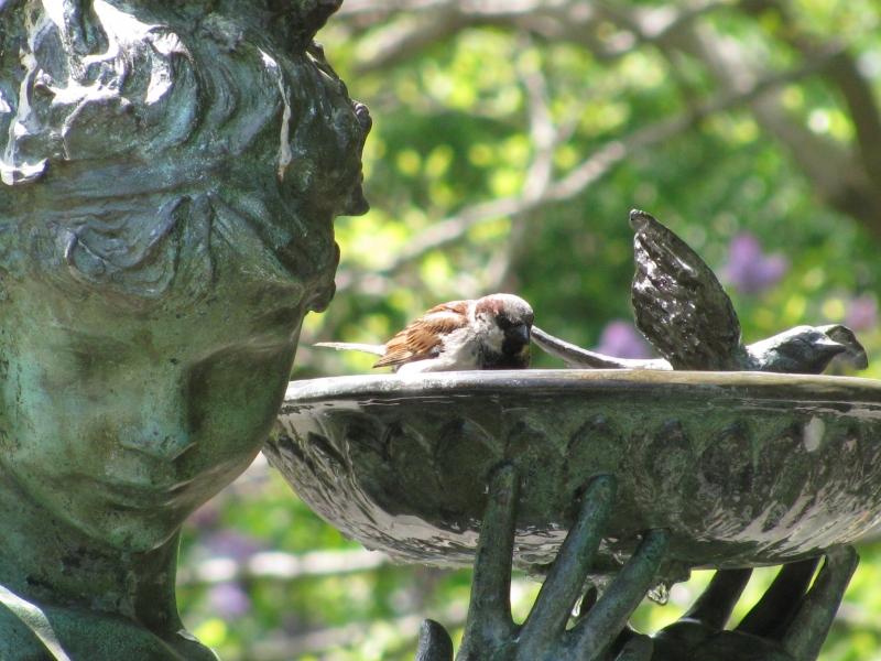 Randy Brozen      Artist and Educator Photography 2 birds, Central Park, NYC