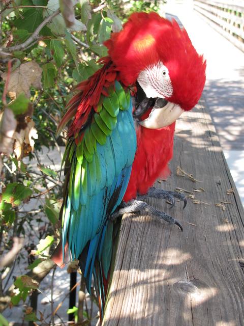 Randy Brozen      Artist and Educator Photography Red Head,  Wakadohatchee Wetlands, Delray Beach, FL