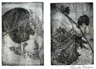 Randy Brozen      Artist and Educator Etchings and Linos etching of leaves, handmade paper