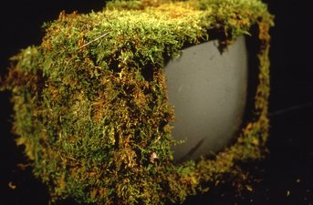 Randy Brozen      Artist and Educator Bryophyta computer monitor, moss
