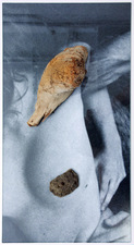 REBECCA GILBERT essex flowers 2015 Driftwood, fossil stone, glass, archival inkjet print