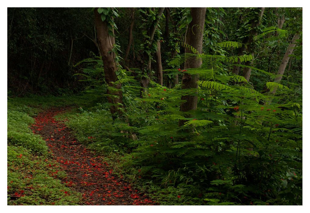 Path to Purgatorio Level 1. Forest of Ferns