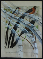 Ron Bimrose Aviary series Mixed-media on 1880s chromolithograph
