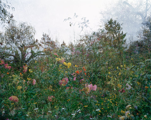 SALLY APFELBAUM  GIVERNY ll, PHOTOGRAPHS Archival Pigment Print
