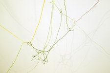 SARA HUBBS The Chocolate Factory colored string covered with wax, pencil drawings on wall