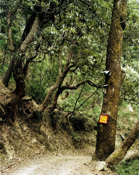<b>The Searchers (Part I)</b>  Path leading to Tushita Meditation Centre (McCleod Ganj, India)