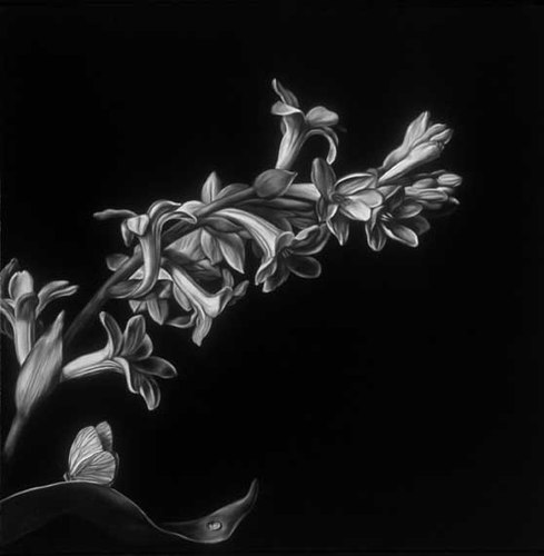 Shelley Reed Flora oil on canvas