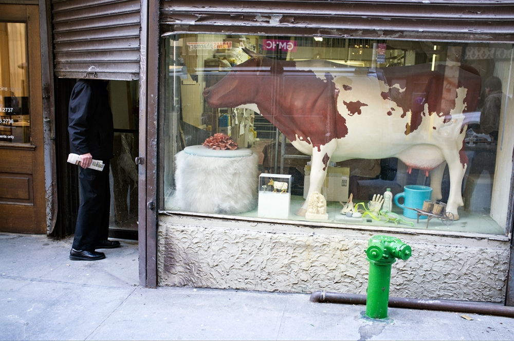 The Daily Drip Cow on West 29th Street