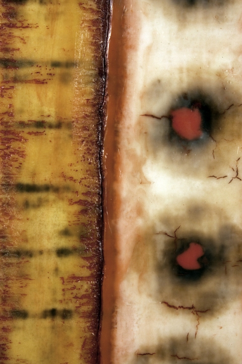The Burnt Offering Series scorched cotton & silk, encaustic, oil glaze