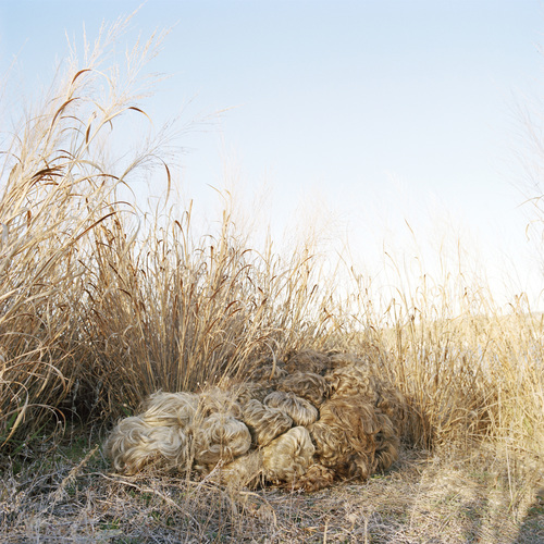 susi brister fantastic habitat archival pigment print on Hahnemuhle photo rag