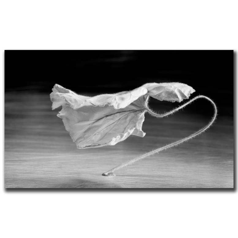 Thomas S. Berntsen dancingleaf series photograph