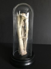Wendy Aikin Assemblage Bone, Ceramic, Waxed Thread